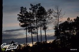 Photo sunset saison festival 2015 la teste de buch adrien sanchez infante photographe bassin d'arcachon (1)