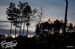 Photo sunset saison festival 2015 la teste de buch adrien sanchez infante photographe bassin d'arcachon (3)