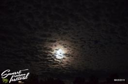 Photo sunset saison festival 2015 la teste de buch adrien sanchez infante photographe bassin d'arcachon (5)